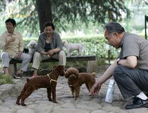 China Dogs